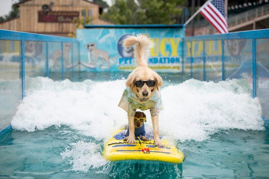 Coppertone sits underneath Jack as the dogs ride a wave at the 2018 Colorado State Fair in Pueblo. Amid concerns about the coronavirus pandemic, fair organizers are going ahead to plan a reimagined version of the venerable exposition for August.