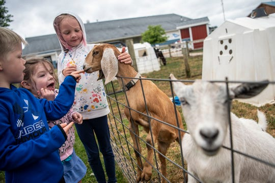 Nolan Frank, 6, Lilly Judd, 5, and Adeline Frank, 8, pet goats at MOO-ville Creamery on Tuesday, June 23, 2020 in Nashville, Mich. Monday morning before daylight, six goats that are less than two months old were stolen, then returned in less than 24 hours.