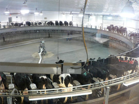 Dairy production rises yearly as management and technology improve continuously.  This big 72 cow milking carrousel is an example.