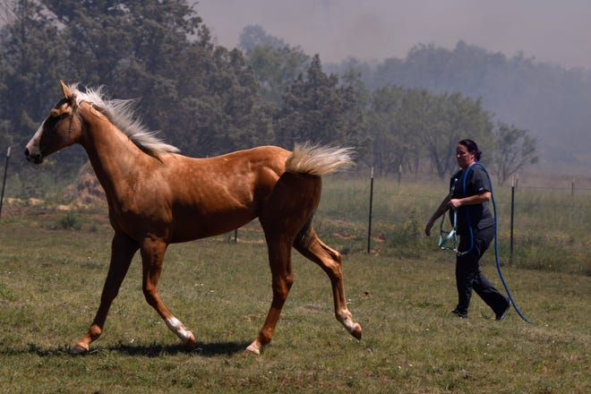 Amanda Sellers tries to bridle her horse near Beltway North and Country Road 355 as area firefighters battle a grass fire north of Abilene Wednesday.