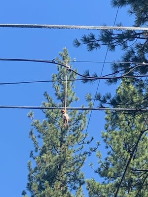 South Lake Tahoe police found a black doll hanging from a power line in a neighborhood Tuesday.