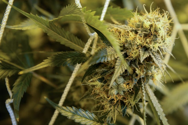 A new survey of Ohio medical marijuana patients shows they are dissatisfied with high prices and dispensary locations.