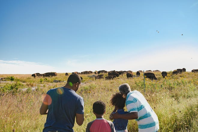 Enjoy a fun day of bison-viewing at the Blue Mounds and Minneopa State Parks.