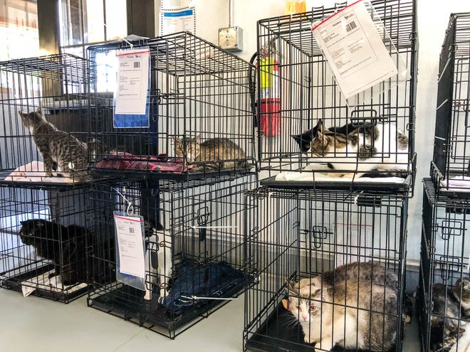 One cat died and 58 were rescued from a Mitchell County home Wednesday. Many cats had respiratory infections or ringworm.