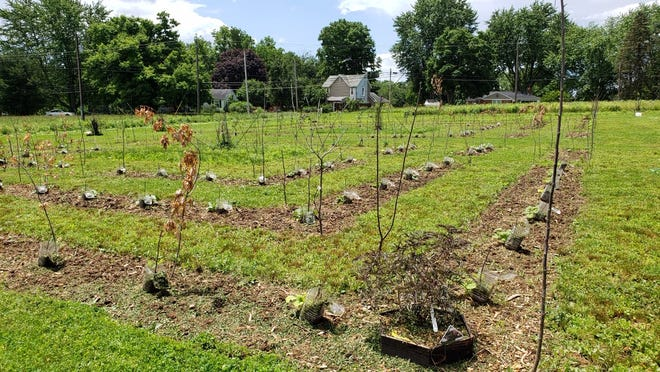 Hands-on garden and farm classes are being offered on Fridays on the Farm in July at 705 Mansfield-Lucas Road for $5 per person at the new business called CaliFarmer.