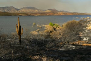 A charred saguaro cactus from the Bush Fire along the shore of Roosevelt Lake outside of Tonto Basin on June 24, 2020.