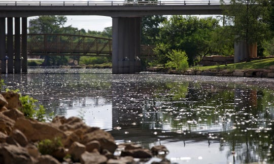 Thousands of dead fish float on the surface of the Concho River in downtown San Angelo on Thursday, June 25, 2020.