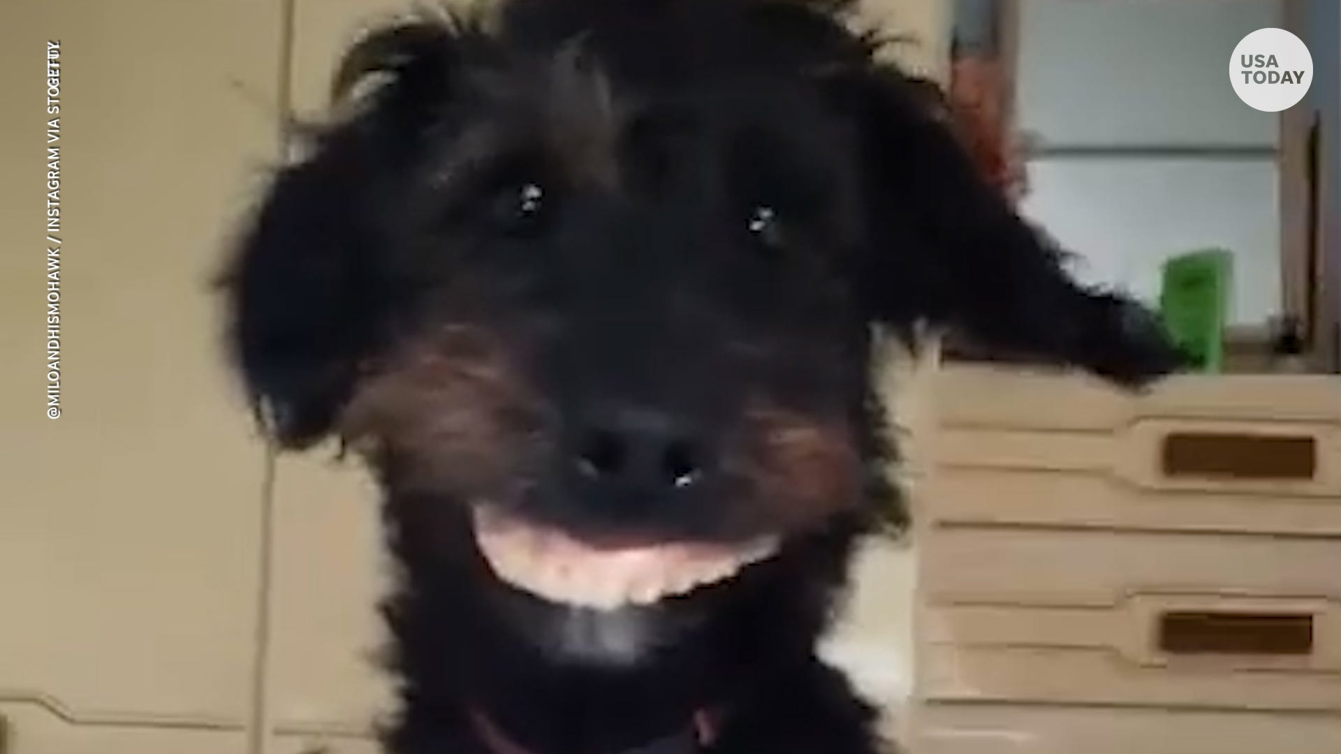 Denture-swiping dog couldn t be prouder