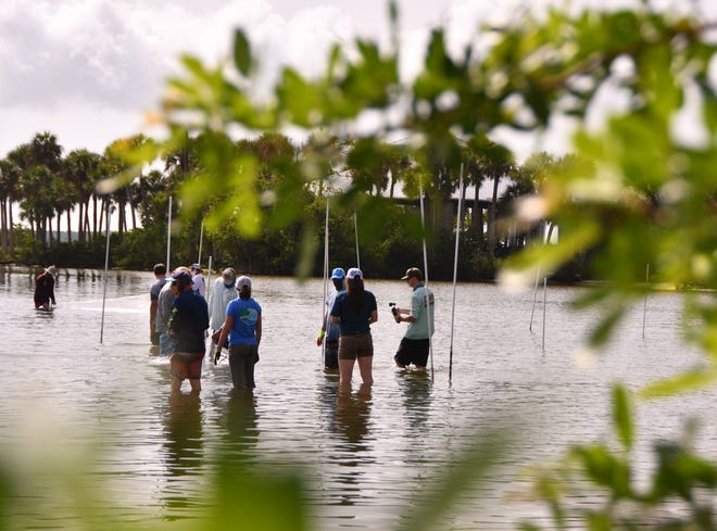"""In July 2020, the University of Florida and Whitney Labs teamed up for the Indian River Clam Restoration Project to put thousands of baby """"super"""" clams into the Indian River Lagoon behind River Rocks in Rockledge."""