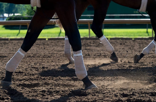 Horses trot down the track at Ellis Park Wednesday morning, June 24, 2020.