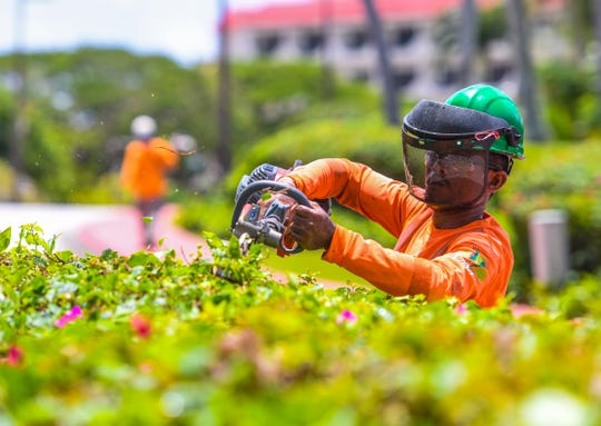 Landscape Management Systems Guam employee, Billy Kintin, trims the hedges lining the road leading to the Hilton Guam Resort & Spa in Tumon on Friday, June 26, 2020.