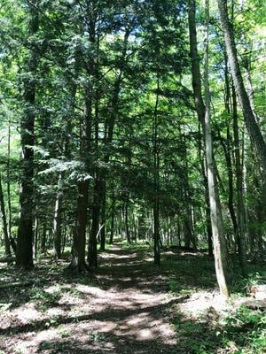 The deep forest at Woodland Dunes in Two Rivers.