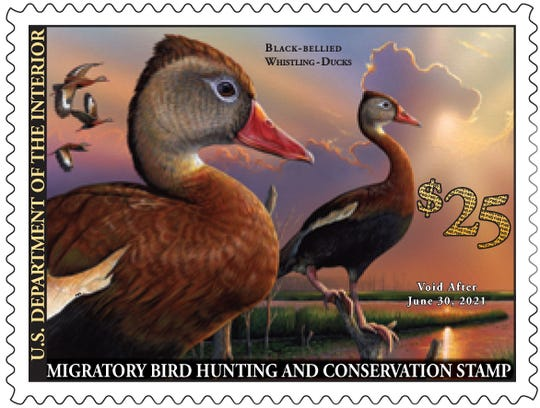 The 2020-21 Migratory Bird Hunting and Conservation Stamp, known to most as the Federal Duck Stamp, went on sale June 26. Sales of the stamp raise money for conservation programs across the U.S.