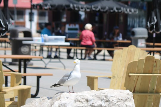 A seagull perched on a rock takes in the sights and sounds of downtown Port Clinton.