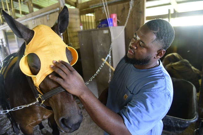 Desmond Ringo puts a harness race hood over Miss Yambol before taking her for a job Saturday at the Richland County Fairgrounds.