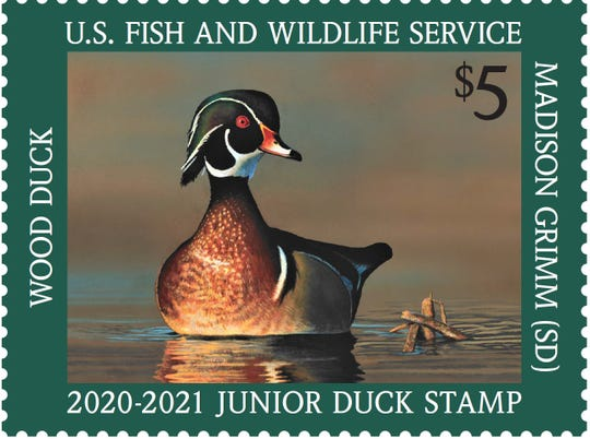 The 2020-21 Junior Duck Stamp features a wood duck painted by Madison Grimm, 13, of South Dakota. Sales of the $5 stamp are used to support youth conservation education.
