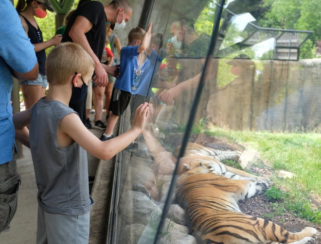 A group observe a duo of tigers at the Devereaux Tiger Forest exhibit that opened last year at the Detroit Zoo.