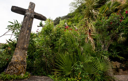 Subtropical foliage in La Roque Gageac.
