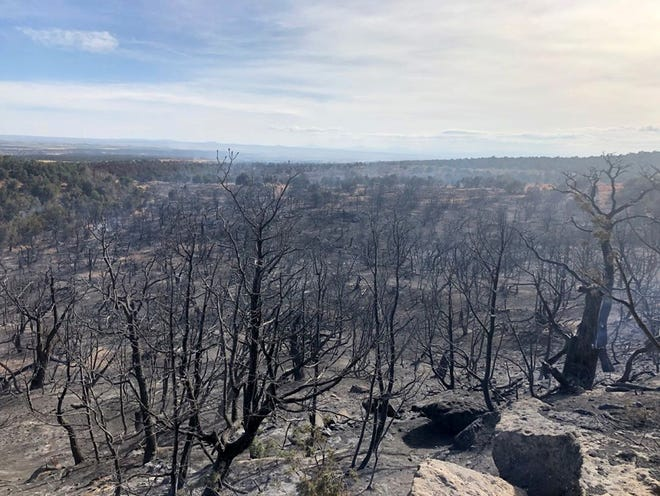 This photo posted on social media June 29 by Durango Interagency Fire Dispatch shows area burned by the Spring Fire in Colorado. It is burning about 14 miles west of Cortez and is about 155 acres in size.