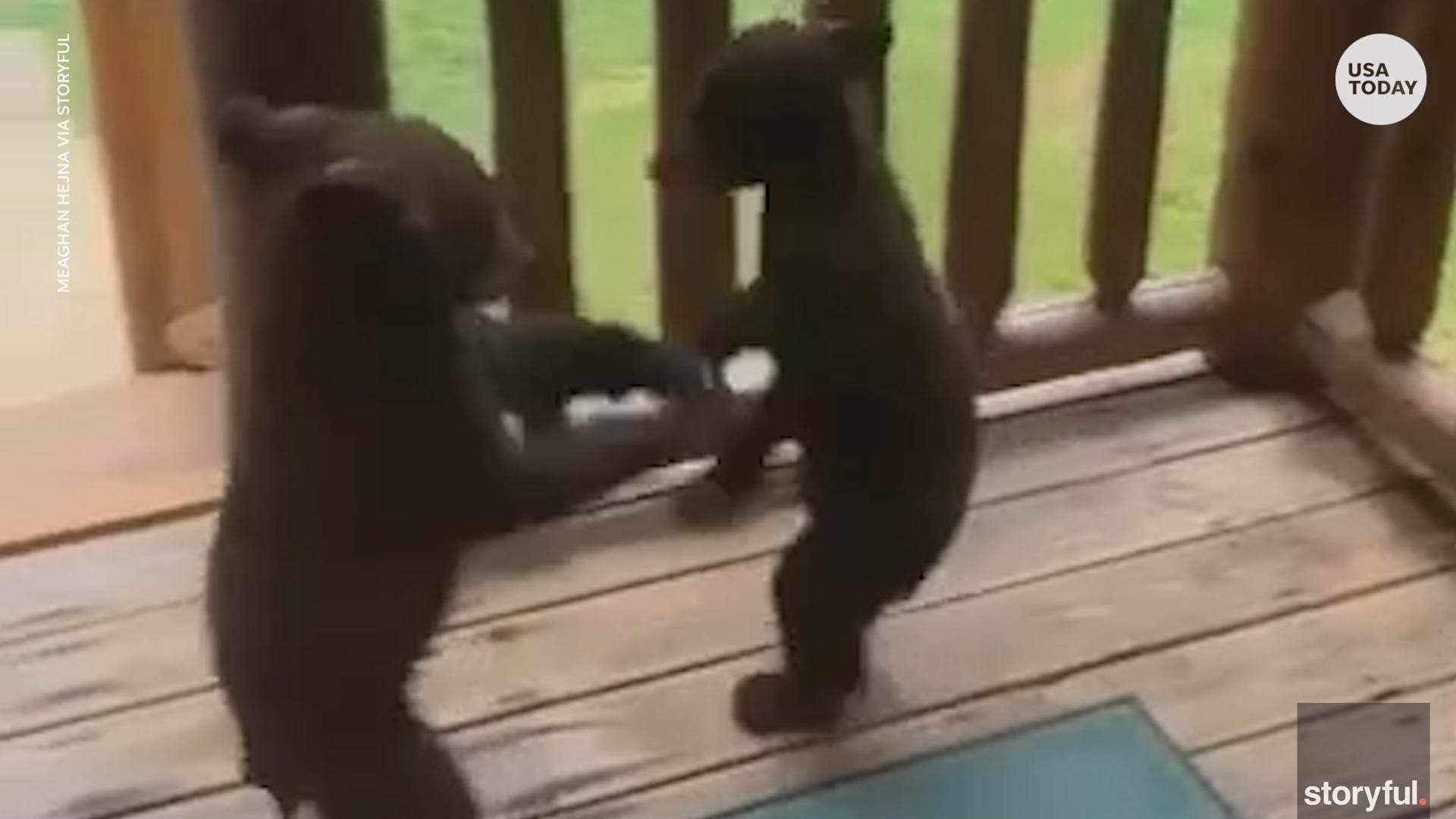 Adorable bear cubs find themselves playing on family s deck