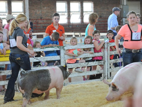 Swine exhibitors try to catch the eye of the judge in the show ring while youngsters crowd the gates to watch older siblings compete.