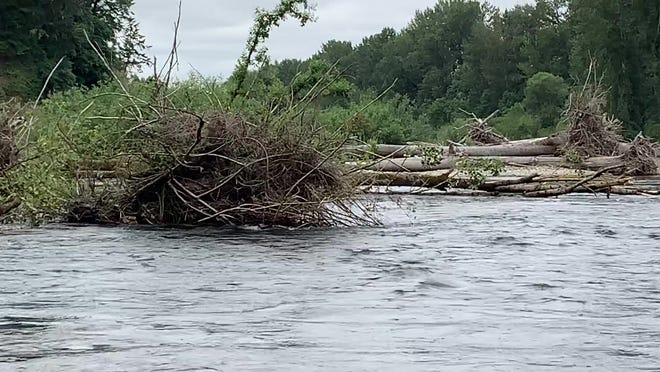 Multiple trees have fallen into the North Santiam River between Greens Bridge and Jefferson, making it very dangerous for anyone to float.