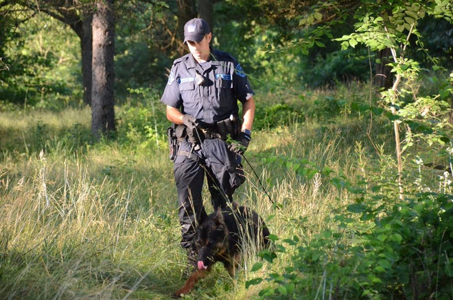 Trooper Joe Bozek and his dog Dexter, from the Michigan State Police Post at Rockford search property on Waubascon Road Thursday looking for the body of a missing Bedford Township woman.  Trace Christenson/The Enquirer
