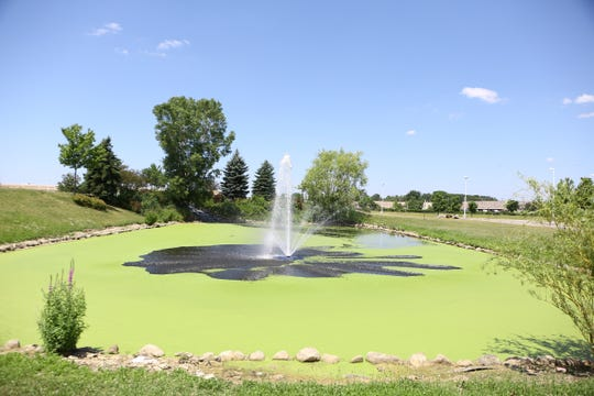 Pond on East Thirteen Mile Road in Madison Heights.