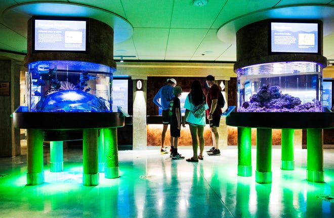 New exhibits at the Bailey-Matthews National Shell Museum on Sanibel Island on Wednesday, July 1, 2020. The museum went through a six million dollar renovation which includes many more exhibits including aquariums and a touch tank..