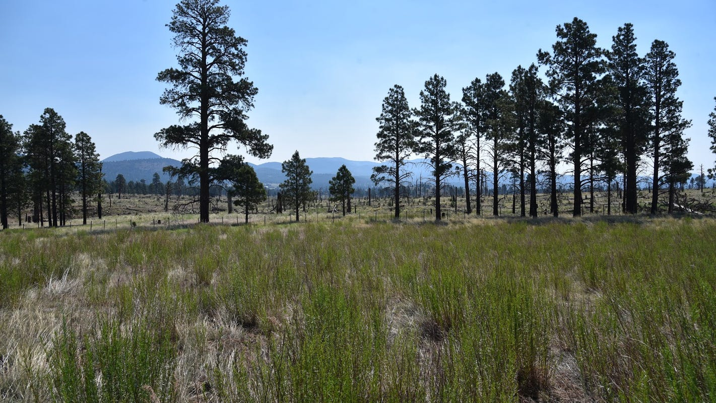 Easy Flagstaff hike shows the forest 10 years after Schultz Fire. Here's what to look for