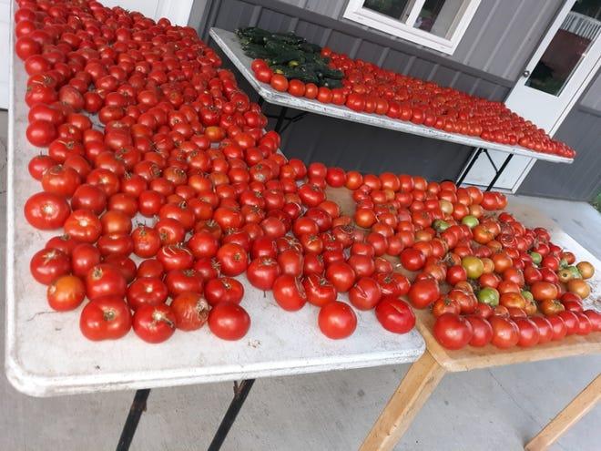 Tomatoes fr.om the Eicher family garden