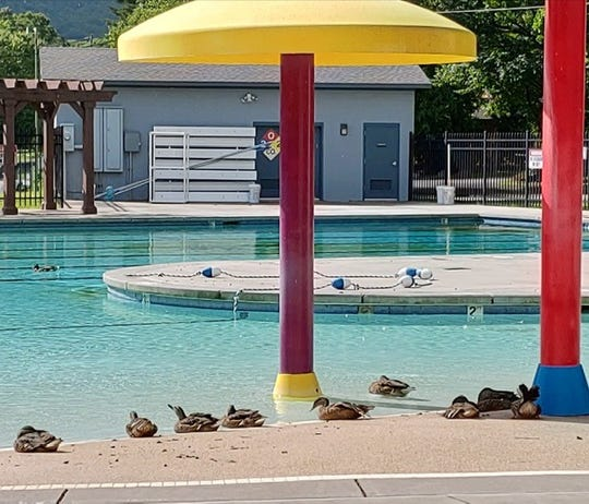 Nobody here but us ducks! Lake Tomahawk ducks are enjoying the Black Mountain Pool on July 2, 2020. The pool is still closed.