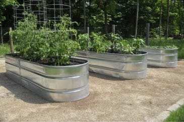 Have you ever considered using a stock tank as a planter?