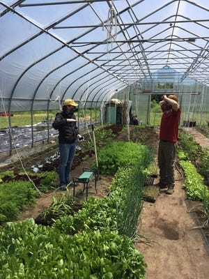 Market volunteer Alexander and farmer Nels Brogren talk about greenhouse farming at the Farm & Forest farm in Mason.
