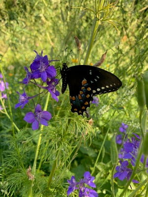 Pollinator plants help attract beneficial insects into the vegetable garden.
