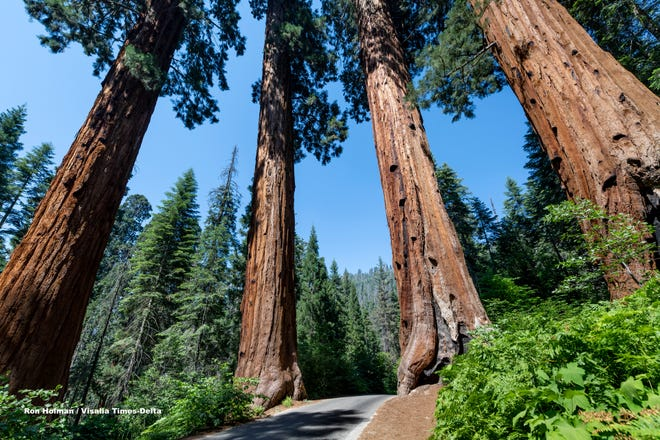 The Four Guardsmen in Sequoia National Park on Monday, July 6, 2020. Campground spaces in Lodgepole, Potwisha and Sunset campgrounds are limited and available by reservation only for the rest of this year. Visitors can pay entrance fees or purchase a pass online before arriving.