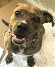 Moriah is waiting at the Sandusky County Dog Warden's shelter for a new home.