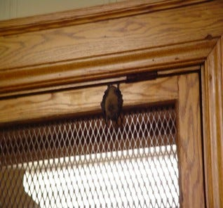 Photo of a bat in a courtroom in the Lincoln County Courthouse shown to the Lincoln County Commission on July 7, 2020, during a discussion to conduct an analysis of the building.