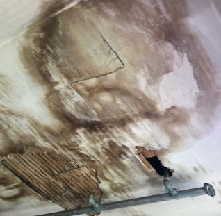 Mold can be a problem after storms due to water damage,  UF/IAF  has some tips to help