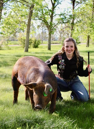 Keira Roth will show this hog at the 2020 Cascade County 4-H Livestock Show and Auction.