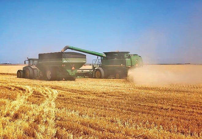 Denton Clark runs the combine while his wife Kadie runs the graincart on their family farm near Haviland.