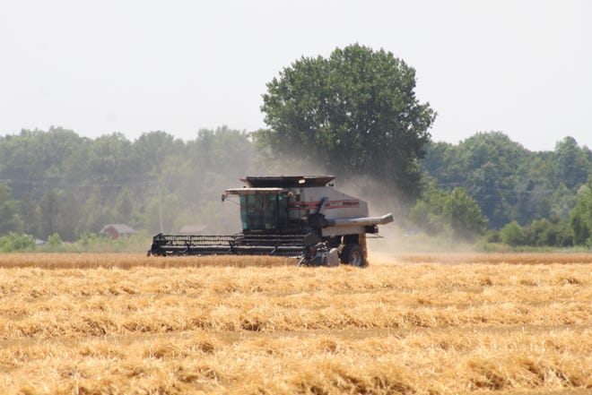 Most Ottawa County farmers, like Rich Thorbahn of Oak Harbor, were able to complete their wheat harvest in a timely manner this year without the weather and flooding-related delays they experienced in 2019.