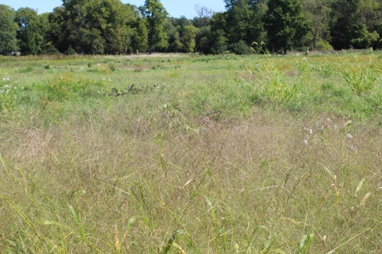 The Sandusky County Park District has started its restoration project at River Cliff Park in Ballville Township.