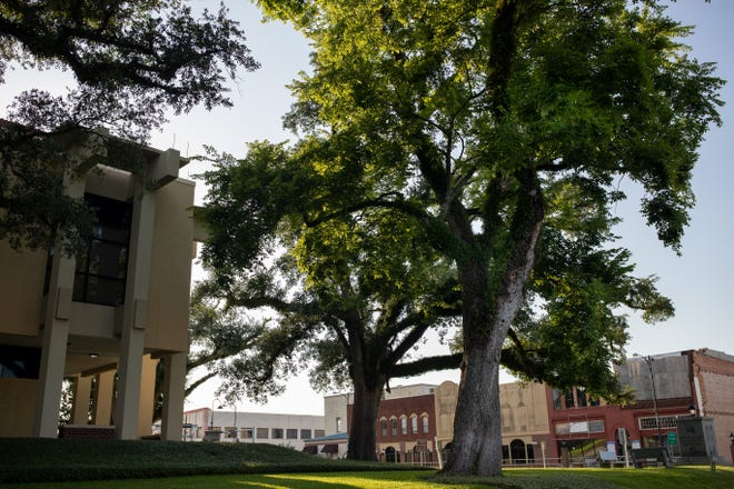 The tree where 23-year-old Claude Neal's dead body was displayed after his 1934 lynching still stands in front of the Jackson County Courthouse.