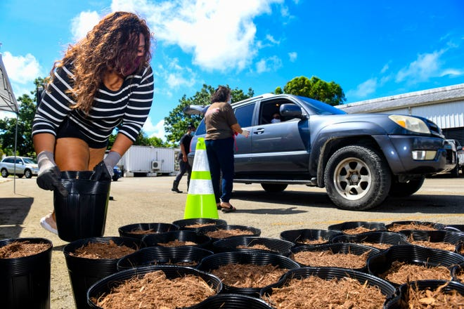 I Hagan Famalåo'an Guåhan member Audrea Mendiola lifts a pot of planting mulch to offer to a recipient, during a distribution of home garden kits last Saturday.  Island gardeners quickly exhausted the supply available, forcing cancellation of a second distribution that had been scheduled for next Saturday.