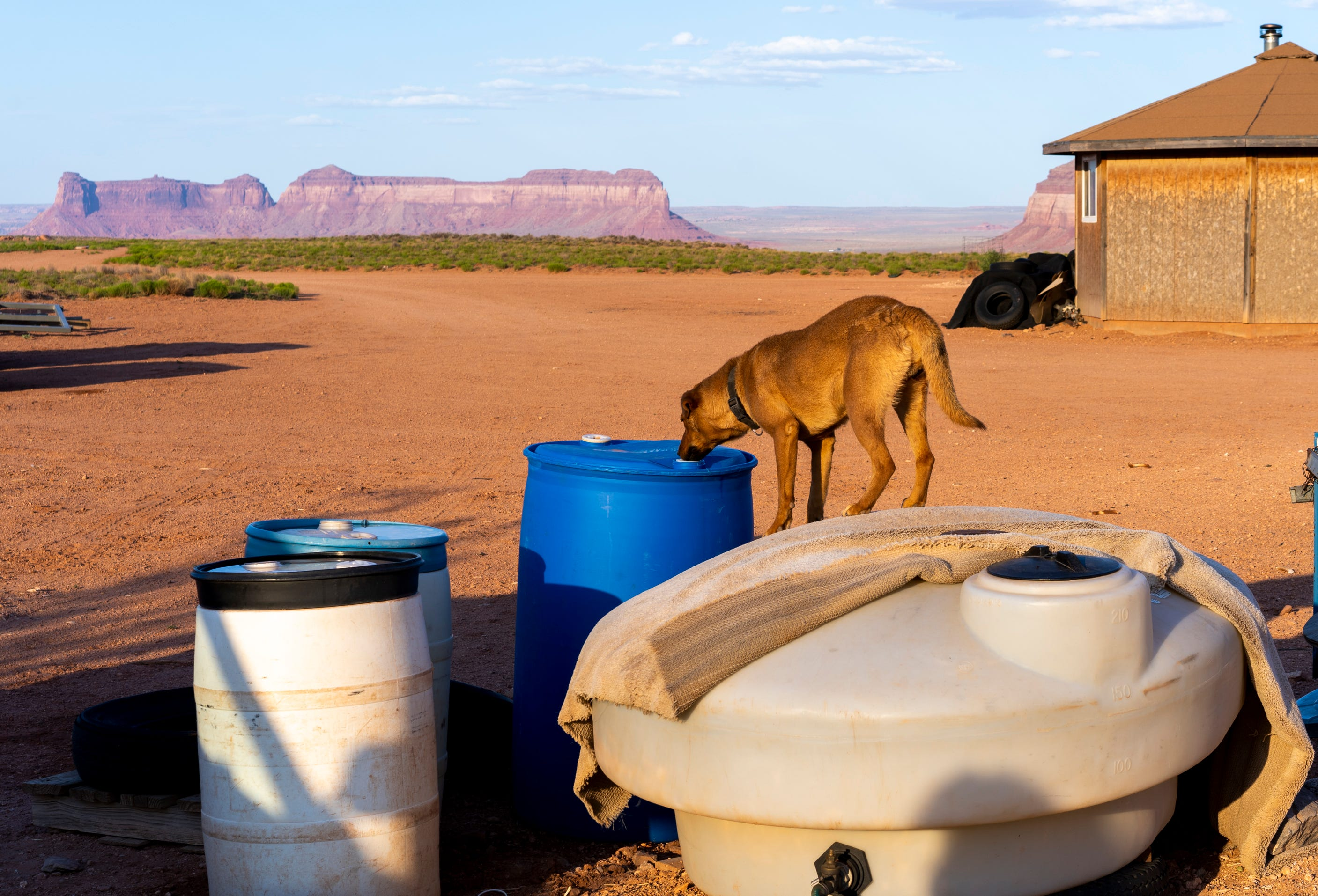 A dog sniffs a water barrel outside Tommy Rock's home in Oljato, Utah, on the Navajo Nation.