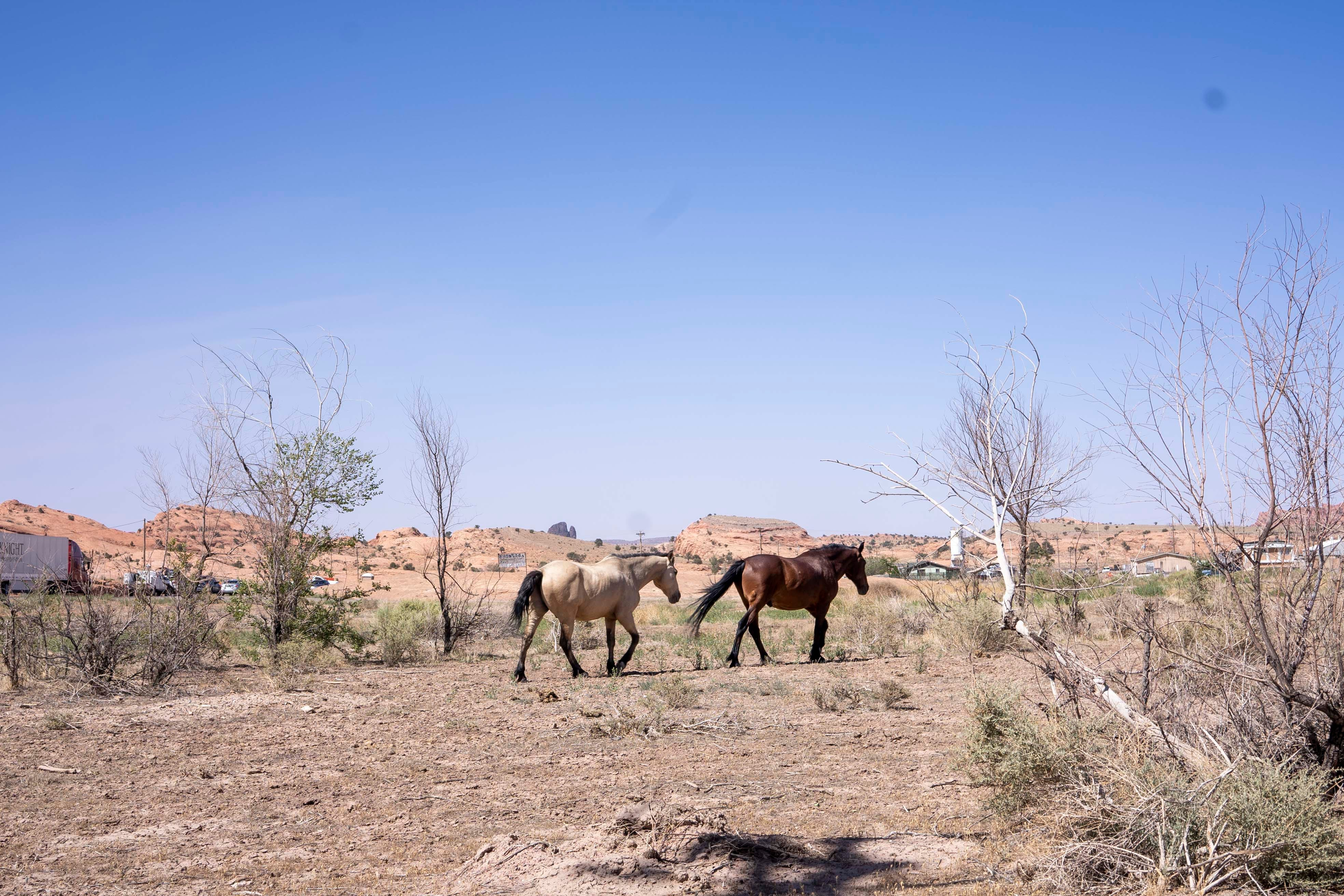 Horses roam in the Monument Valley Tribal Park on the Navajo Nation.