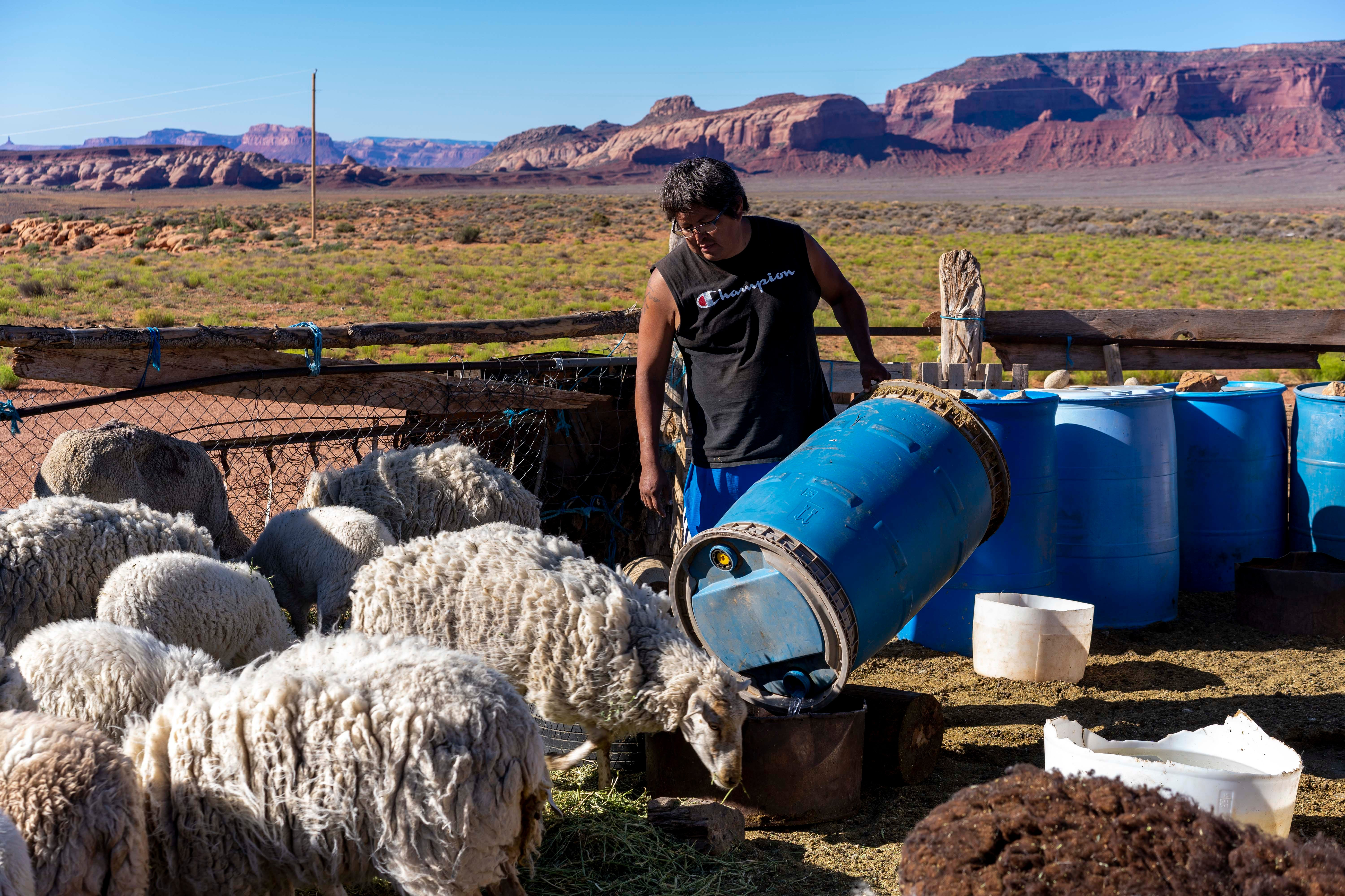 Tommy Rock pours water for his family's sheep at their home in Oljato, Utah.