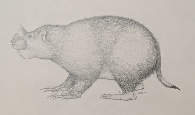 Dr. Jonathan Calede of Ohio State Marion has uncovered a now extinct new species of rodent with horns that lived in Nebraska during the Miocene epoch.