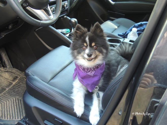 Django, a 14-year-old Pomeranian, was attacked and killed by another dog July 10. The owner of the attacking dog left the scene of the incident.